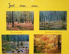 Galeria Konkurs jesienny