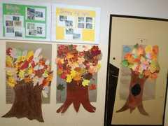 Galeria drzewa