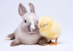 zajaczek.jpeg